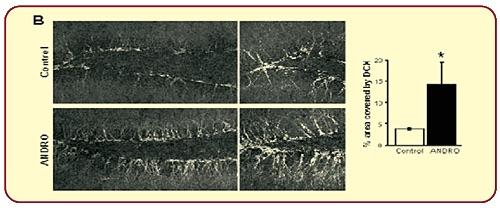neuroactin-data-5
