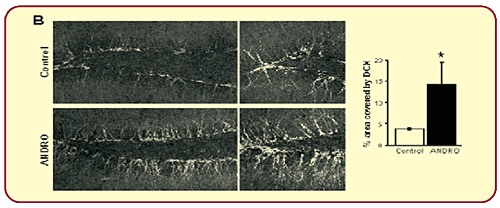neuroaktyna-dane-5